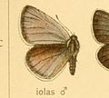 Iolanaiolasm.jpg
