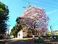 Ipê florido em frente ao Teatro Municipal de Curionópolis.jpg