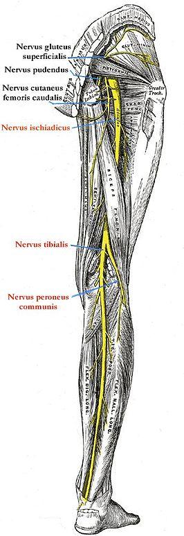 zenuwpijn in de voet