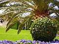 Israel-Carmel-050508 046 (2551353593).jpg