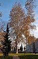 Istanbul Tree (244378529).jpeg