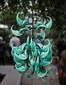 Jade vine (70214).jpg