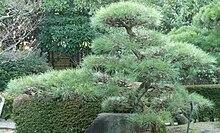 Asiatische Regenszenen in einem Park
