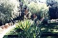 Jardim Botânico de Lisboa128.jpg