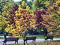 Jesiennie. - panoramio (3).jpg