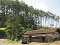 Jl. Raya Bandung - Sumedang - Cirebon - panoramio.jpg