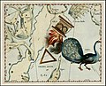 Johannes Hevelius - Pavo, Ara and Triangulum Australe.jpg
