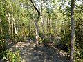 Jungle Walking Mangrove Forest Katka Sundarban National Park Bangladesh - panoramio (4).jpg