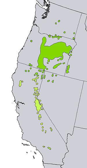 Juniperus occidentalis - Image: Juniperus occidentalis range map