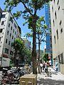 Kanocho - panoramio (9).jpg