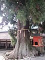 Kasuga Taisha Kasuga Grand Shrine National Treasure World heritage 国宝・世界遺産春日大社23.JPG