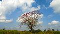 Kaziranga grassland.jpg
