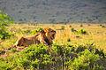 Kenia 2012 (43).JPG
