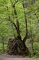 Kiental entre Herrsching y Andechs, Alemania 2012-05-01, DD 04.JPG