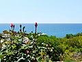 Kissonerga, Cyprus - panoramio (4).jpg