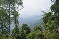 Koh Tarutao, Thailand, Primary forest.jpg