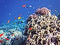 Korallenriff im Roten Meer..DSCF7450ОВ.jpg