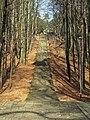 Koszalin - schody na Krzyżankę.jpg