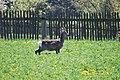 Kozlany-alibaba - panoramio.jpg