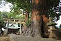 Kumano-jinja (Mifuku, Izunokuni) 2012-10-13 (2).jpg