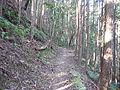 Kumano Kodo Dainichigoe World heritage47.JPG