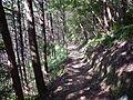 Kumano Kodo Dainichigoe World heritage53.JPG