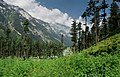 Kumrat Valley greenry.jpg