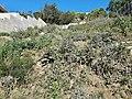 La Miranda - Esplugues de Llobregat - 20210502 180333.jpg
