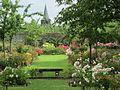 La roseraie avec vue sur l'église de Rambures.jpg