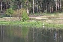 Lago Iporá detalle aves.jpg
