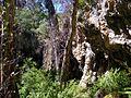 Lake Cave @ Margaret River (4449810677).jpg