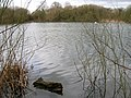 Lake off Adbolton Lane - geograph.org.uk - 1760572.jpg