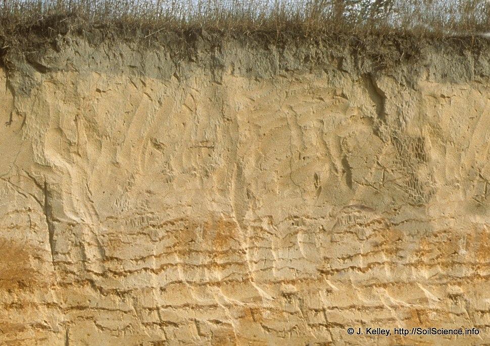 Lamella clay-sandy soil.jpg