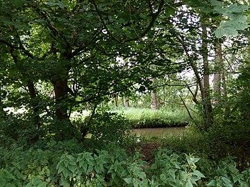 Landschaftsschutzgebiet Warmenau-Ufer LSG OS 00019 Datei 33.jpg