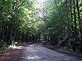 Lane through Lamberden Wood - geograph.org.uk - 1419987.jpg