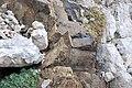 Latemar Lava rocks.JPG