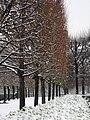 Le jardin des Tuileries sous la neige, 17 décembre 2009.jpg