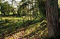 Leafy path, Strangford - geograph.org.uk - 1562805.jpg