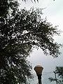 Leaves and trees palavangudi jpg 32.jpg