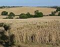 Leicestershire farmland - geograph.org.uk - 522448.jpg