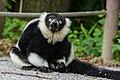Lemur (36499875273).jpg
