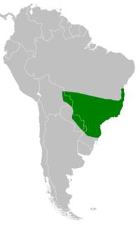 Leopardus guttulus range map