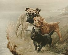"""A painting of three dogs of different sizes, the smallest black, the mid sized one is brown and the largest, a bulldog is cream. They stand on a clifftop looking into the distance."""