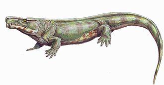 1911 in paleontology - Limnoscelis