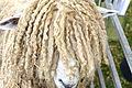 Lincoln sheep.jpg