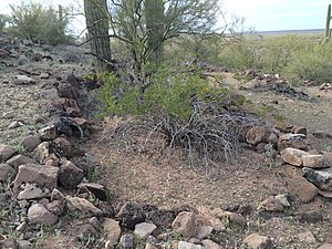Los Robles Archaeological District - Hohokam ruins at Cerro Prieto.