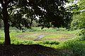 Lotus Pond - Indian Botanic Garden - Howrah 2013-03-31 5790.JPG