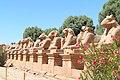 Luxor Karnak-Tempel 2016-03-21 Widder-Sphinx-Allee 04.jpg