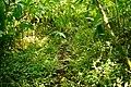 Lyon Arboretum - Aihualama Trail (8331421760).jpg