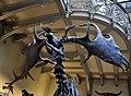MNHN Paris Megaloceros giganteus 13052012 1.jpg
